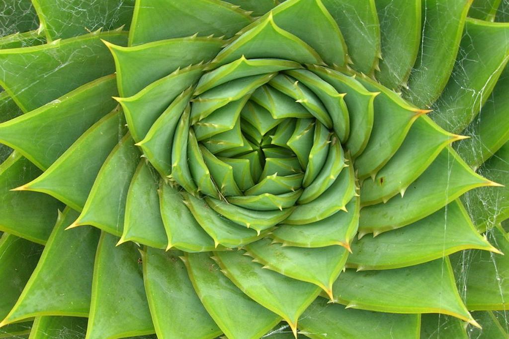 Géométrie sacrée naturelle